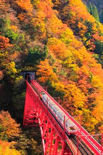 秋の黒部峡谷鉄道・トロッコ電車と紅葉の写真素材 [FYI01799787]