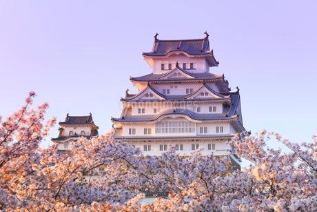 夕焼けの姫路城とサクラの写真素材 [FYI01799790]