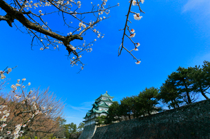 名古屋城天守閣とウメの写真素材 [FYI01799791]
