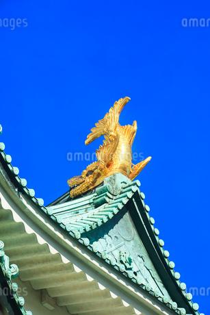 名古屋城天守閣 金鯱の写真素材 [FYI01799793]