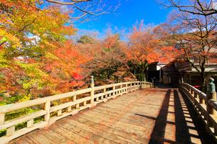 秋の山中温泉鶴仙渓・こおろぎ橋に紅葉の写真素材 [FYI01799811]