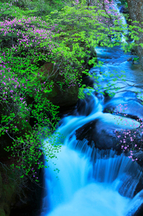 清流と花咲くトウゴクミツバツツジの写真素材 [FYI01799832]