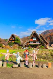 秋の白川郷 合掌造り集落に案山子の写真素材 [FYI01799836]