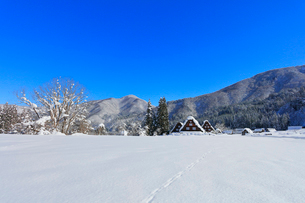 冬の白川郷・快晴の空と茅葺屋根に雪の写真素材 [FYI01799847]