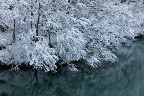 冬の川と木立に雪の写真素材 [FYI01799859]