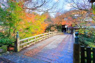 秋の山中温泉鶴仙渓・こおろぎ橋に紅葉の写真素材 [FYI01799888]