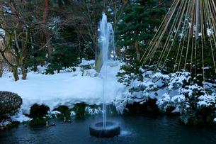 冬の北陸金沢 兼六園日本最古の噴水にカモと雪吊りの写真素材 [FYI01799896]