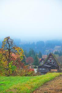 秋の白川郷 柿の木と合掌造り集落に霧の写真素材 [FYI01799917]