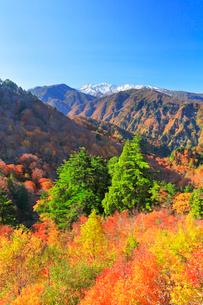 秋の白山白川郷ホワイトロード・紅葉と冠雪の白山の写真素材 [FYI01799918]