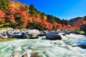 香嵐渓 紅葉と巴川に待月橋の写真素材 [FYI01799961]