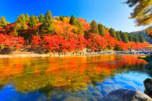香嵐渓 紅葉と巴川に待月橋の写真素材 [FYI01799963]