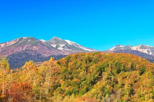 秋の乗鞍高原・快晴の空に乗鞍岳と紅葉の写真素材 [FYI01799978]