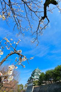 名古屋城天守閣とウメの写真素材 [FYI01799991]