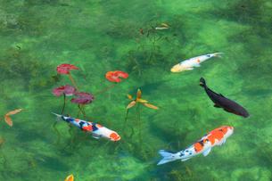 モネが描いた絵のような池の写真素材 [FYI01799992]