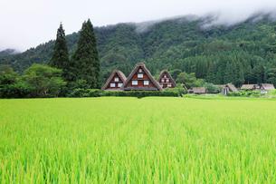 夏の白川郷・合掌造り集落に山霧の写真素材 [FYI01800004]