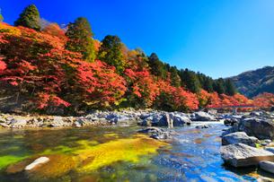 香嵐渓 紅葉と巴川に待月橋の写真素材 [FYI01800017]
