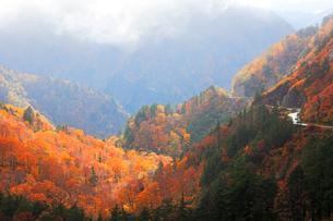 秋の白山白川郷ホワイトロード・紅葉の写真素材 [FYI01800050]