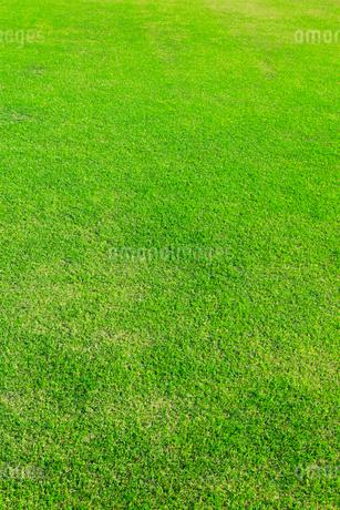 刈り込まれた芝生の写真素材 [FYI01800078]