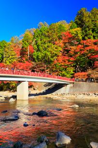 香嵐渓 紅葉と巴川に待月橋の写真素材 [FYI01800086]