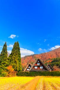 秋の白川郷 合掌造り集落の写真素材 [FYI01800113]