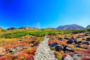 秋の立山 天狗平より雄山などの山々を望むの写真素材 [FYI01800123]