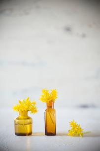 アンティークの茶色いガラス瓶と黄色い多肉植物の花の写真素材 [FYI01800131]