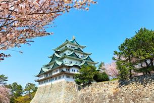 名古屋城 天守閣と桜の写真素材 [FYI01800149]