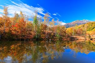秋の乗鞍高原・まいめの池より乗鞍岳と紅葉の写真素材 [FYI01800151]