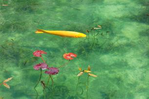 モネが描いた絵のような池の写真素材 [FYI01800152]