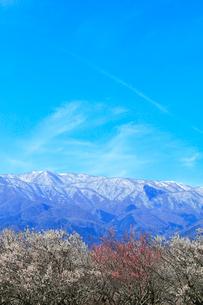 ウメの花と残雪の鈴鹿山脈の写真素材 [FYI01800168]