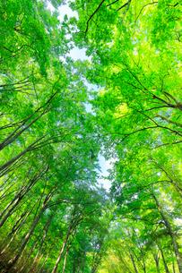 ブナの森の写真素材 [FYI01800174]