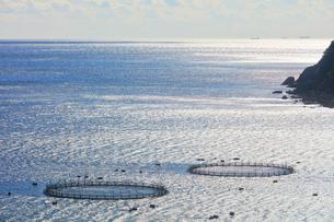 二木島湾のマグロ養殖いけすの写真素材 [FYI01800177]