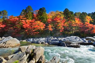 香嵐渓 紅葉と巴川の写真素材 [FYI01800220]