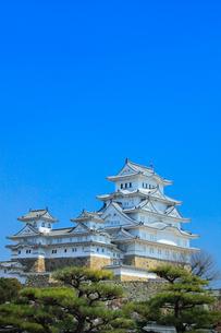 姫路城 天守閣と松の写真素材 [FYI01800226]