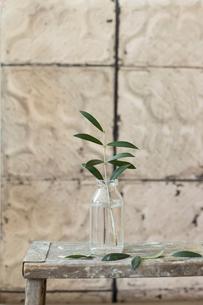 瓶に活けてある一本のオリーブの枝の写真素材 [FYI01800252]