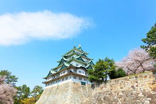 名古屋城 天守閣と桜の写真素材 [FYI01800255]