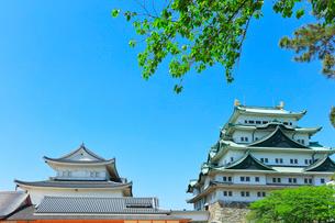名古屋城の写真素材 [FYI01800291]