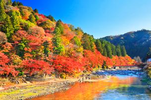 香嵐渓 紅葉と巴川に待月橋の写真素材 [FYI01800331]
