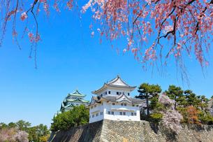 名古屋城 西南隅櫓と天守閣に枝垂桜の写真素材 [FYI01800381]