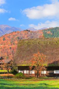 秋の白川郷 柿の木と合掌造りの写真素材 [FYI01800407]