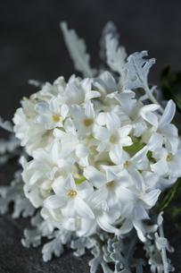 白いヒヤシンスとダスティーミラーのブーケの写真素材 [FYI01800436]