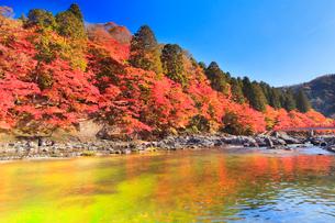 香嵐渓 紅葉と巴川に待月橋の写真素材 [FYI01800437]
