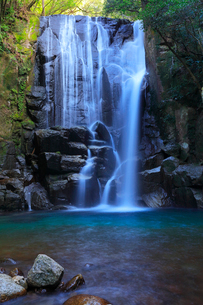 桑の木の滝の写真素材 [FYI01800449]