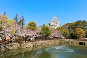 姫路城 城見橋より天守閣と桜に噴水の写真素材 [FYI01800456]