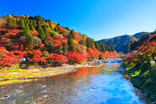 香嵐渓 紅葉と巴川に待月橋の写真素材 [FYI01800480]