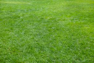 芝生の写真素材 [FYI01800527]