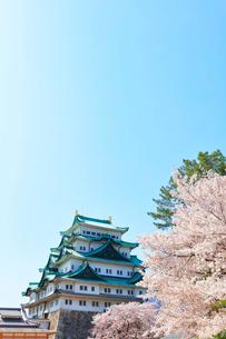 名古屋城 天守閣と桜の写真素材 [FYI01800540]