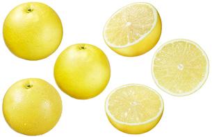 グレープフルーツ白バックの写真素材 [FYI01800737]
