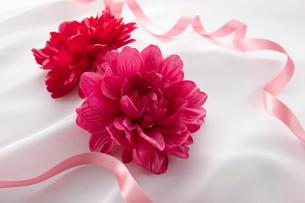 赤い花のギフトイメージの写真素材 [FYI01800741]