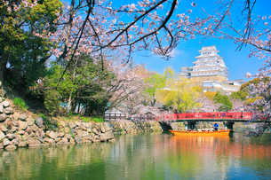 姫路城 天守閣と桜に赤い城見橋と観光学習船の写真素材 [FYI01800752]
